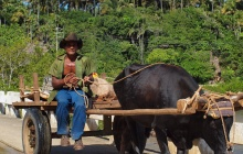 : Viñales valley – Tour on a local char